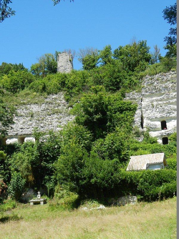 Faune et flore des bords de Gironde