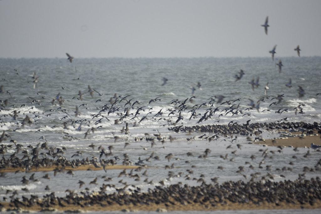 Des oiseaux par milliers