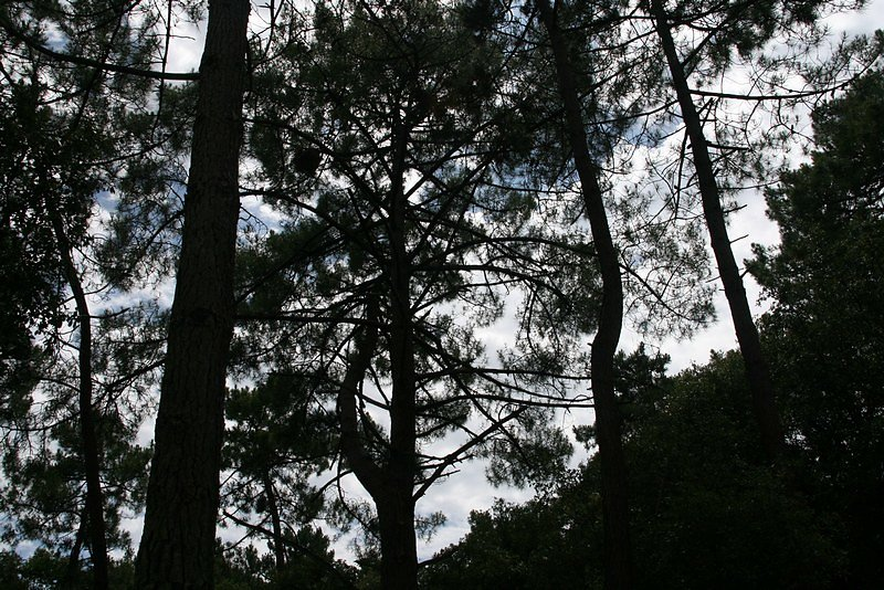La Forêt de la Coubre  Sorties
