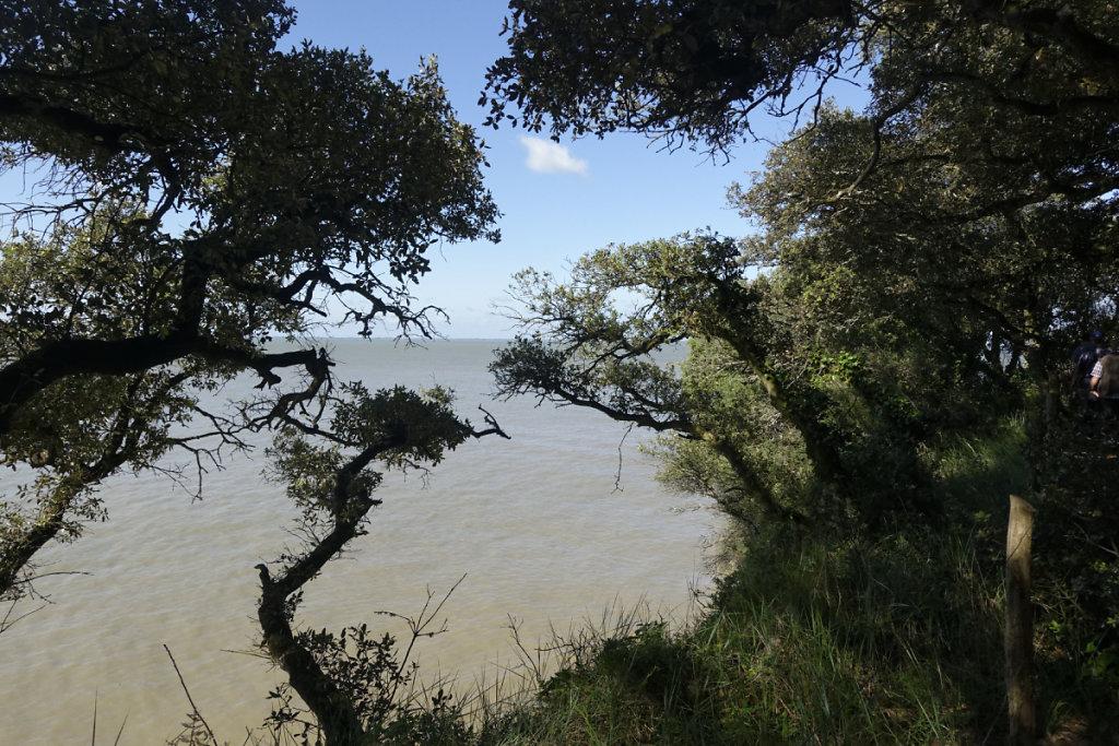 L'estuaire au travers de la végétation