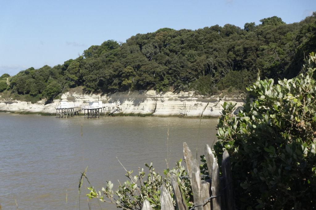 Chênes verts sur falaise calcaire