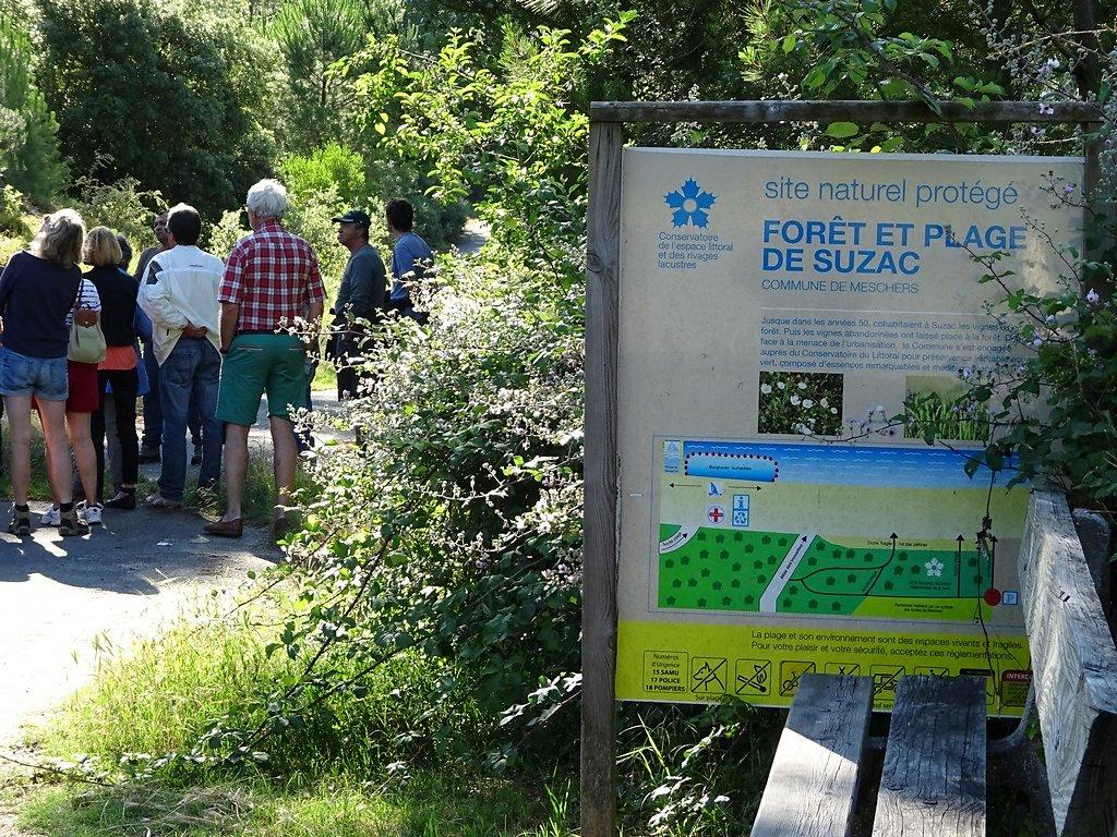 forêt de Suzac