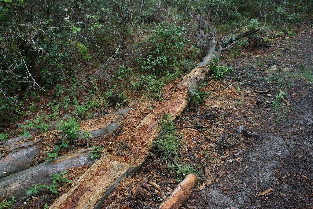 bois mort source de vie insectes