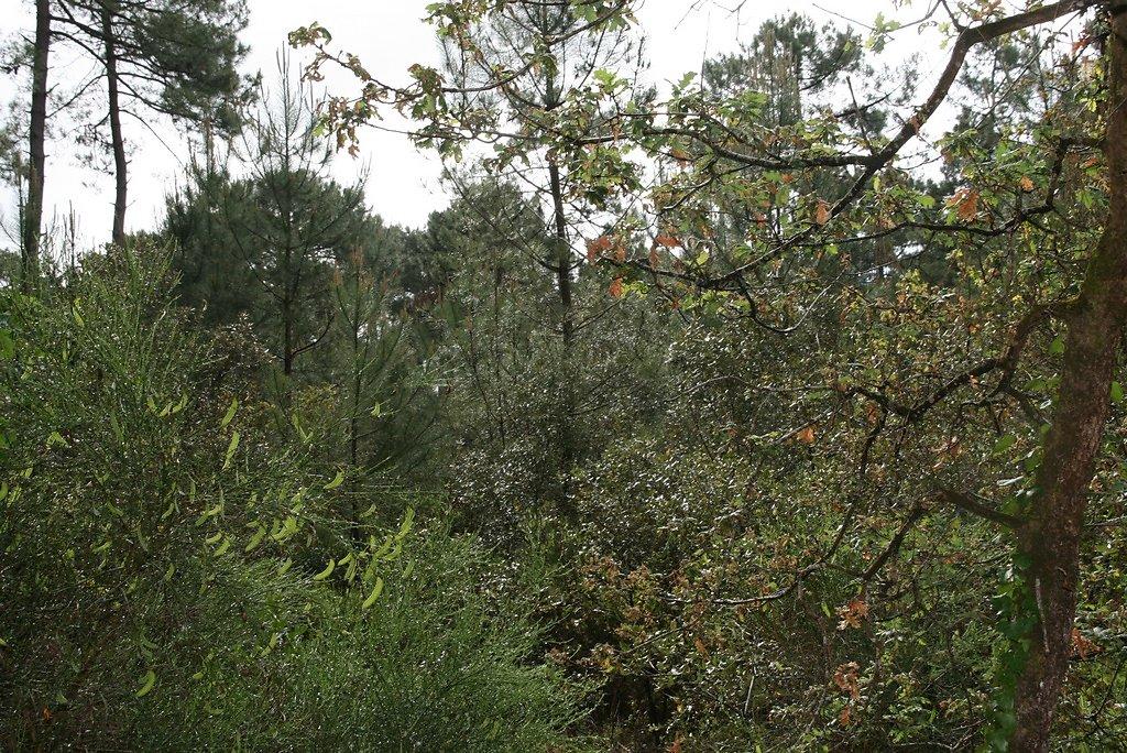 forêt regénérée en 95