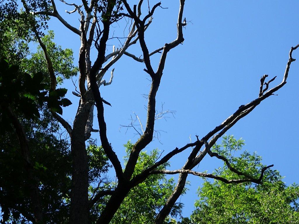 arbre mort mais abritant lucarnes et insectes