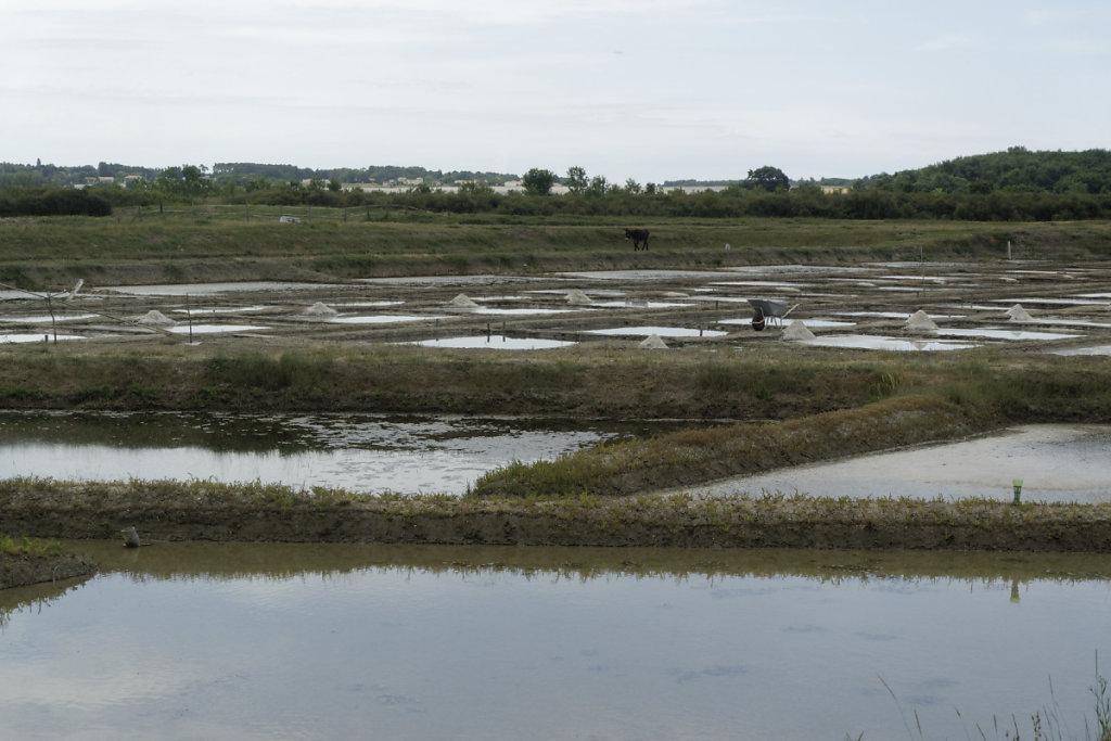 Vue sur le marais