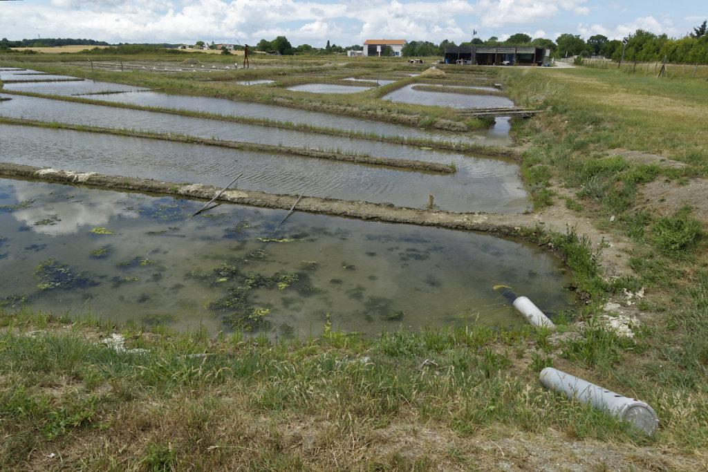 Bassins d'évaporation (métières)