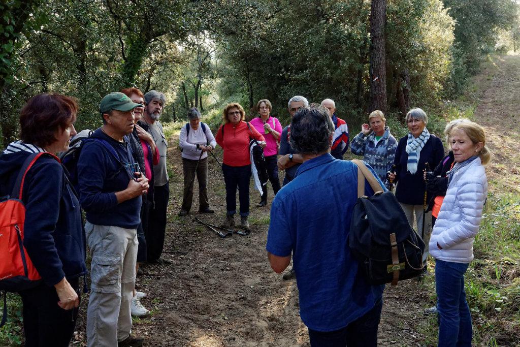 Marche tonique en forêt de la Coubre