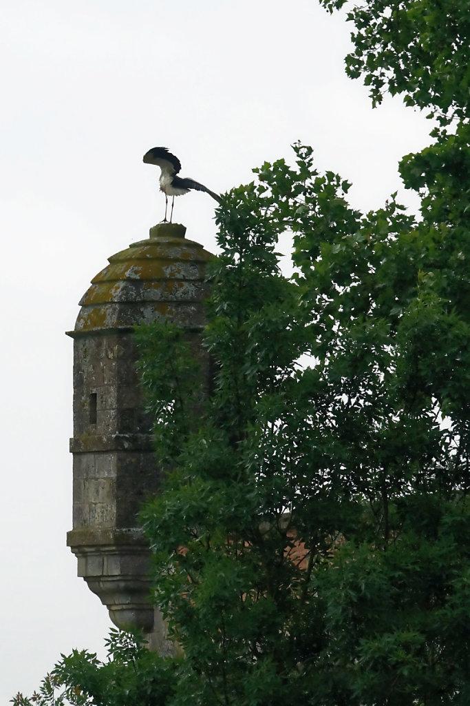 La cigogne, emblème des marais  charentais