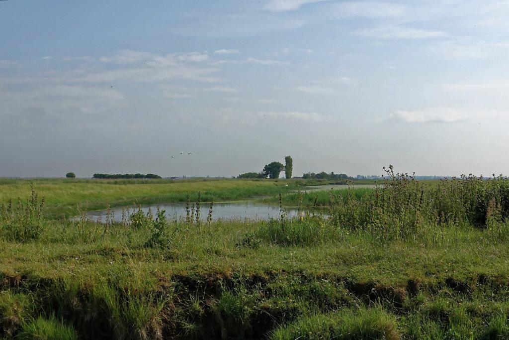 Les Marais, entre terre et eau