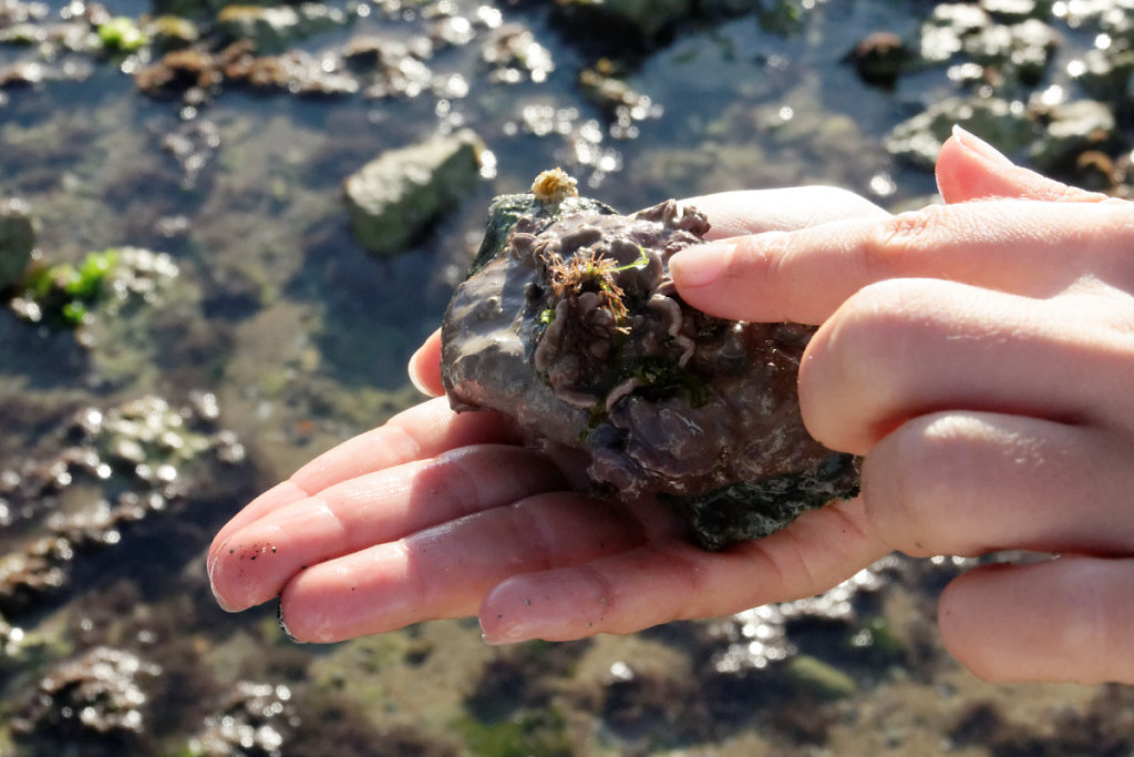 Algues encroûtantes