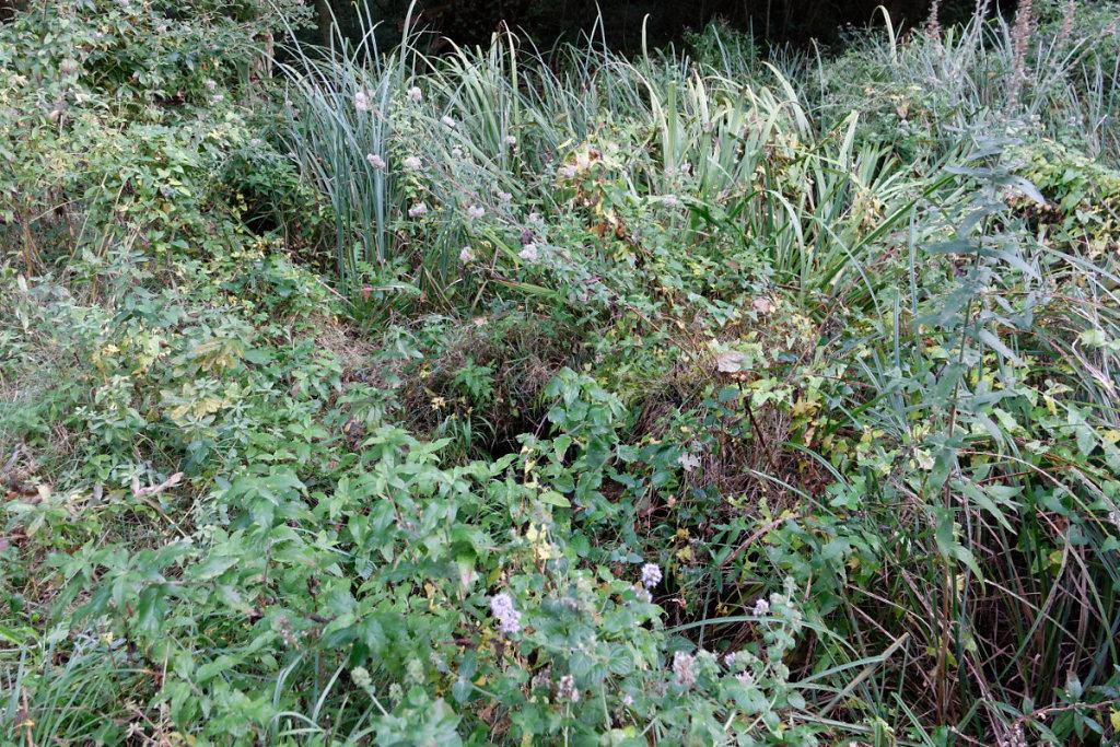 Végétation des milieux humides