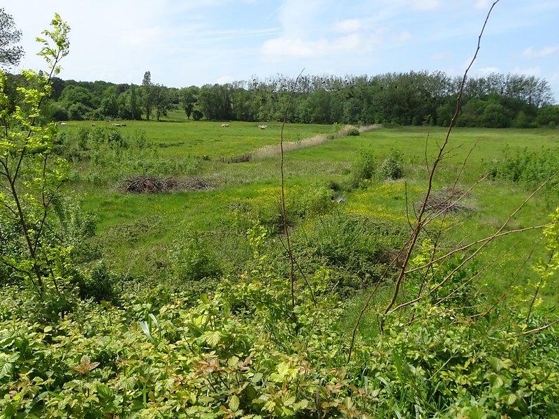 l'ancien étang devenu pâturage