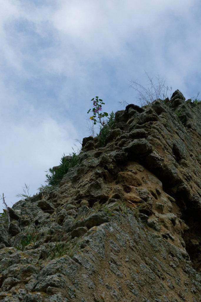 La végétation à l'assaut des ruines