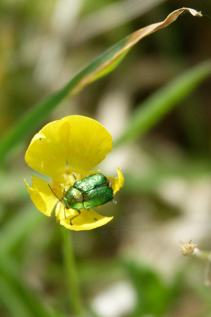 Un petit coléoptère