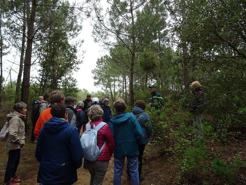 l'entretien de la forêt coupes et élircissements