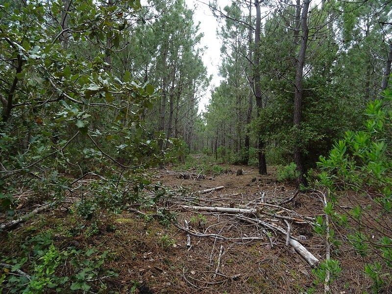 accès des matériels de coupes et de collecte des troncs