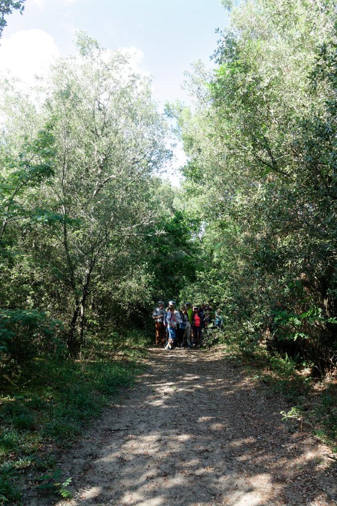 Lignes et tranchées quadrillent la forêt