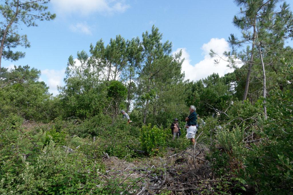 les rémanents sont laissés sur place après interventions de l'ONF, ils participent à la régénération du sol forestier