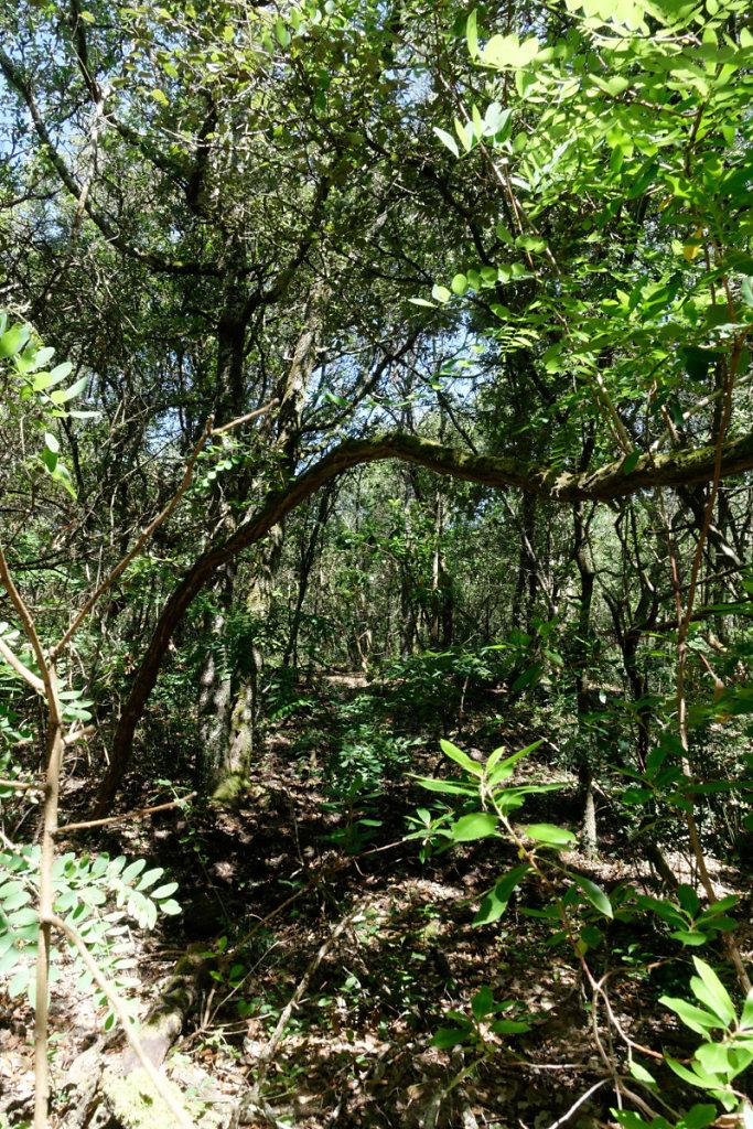 boisement varié et sol noir : caractéristiques d'une vieille forêt