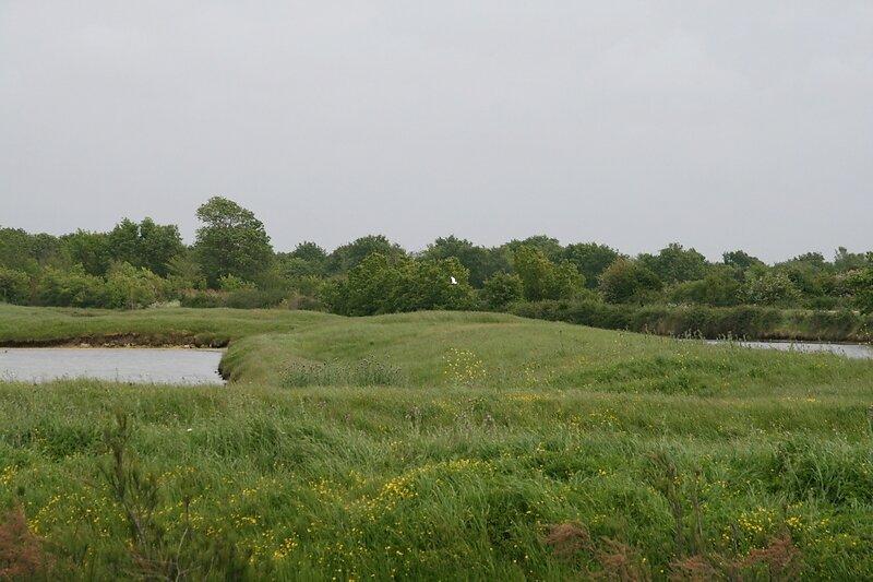 paysage très verdoyant