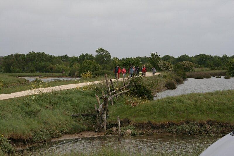 paysage typique des marais