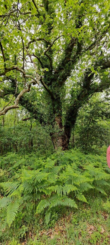 Marais doux de la Presqu'île d'Arvert Eric Bahuon